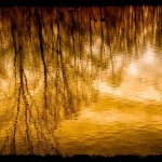 Efraim Perl - Reflection of Fall - 3rd Level 1 Pictorial