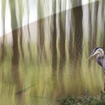 Ursula Tweddle - A Heron'S View - 2nd - Digital Advanced Artistic Contemporary