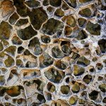 Paul Lindo / Honeycomb Rockface / 2nd / Digital Beginner Texture
