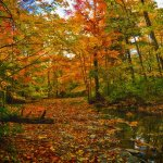 Efraim Perl - Fall At Sawmill Valley - HM - Digital Beginner Nature