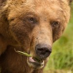 Garry Revesz - Grizzly Boar_ - 2nd - Digital Beginner Nature