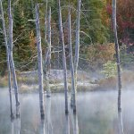 Kay Woollam - Fall Colour At The Sticks - HM - Digital Advanced Pictorial