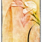 Hilarie McNeil-Smith - Lilies - 2nd Level 2 Creative