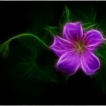 Ron Manning - Shaggy Geranium - HM - Digital Advanced Artistic Contemporary