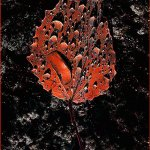 Jim Calvert - Red Leaf With Dew Drops - 1st - Digital Advanced Artistic Contemporary