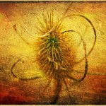 Bob Warren - Teasel At The End - 2nd - Digital Advanced Artistic Contemporary