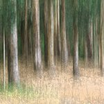 Sherry Prenevost / Textured Trees / 1ST / Digital Beginner Artistic Contemporary