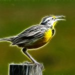 Ron Manning / Electrifying Meadowlark / 2nd / Digital Advanced Artistic Contemporary