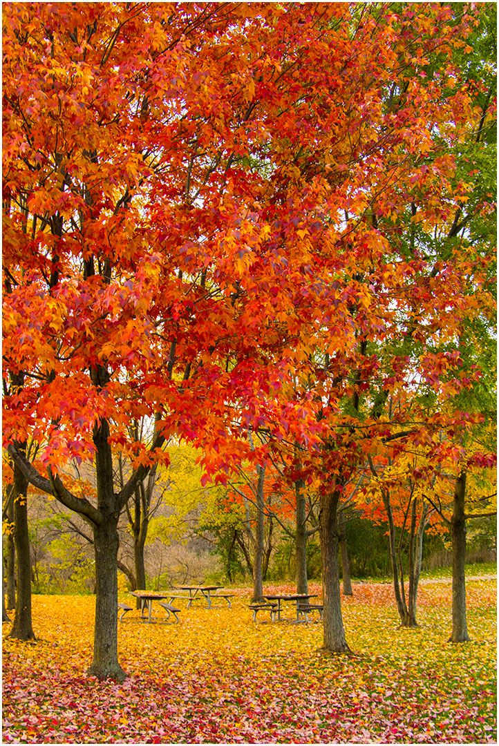 Mike Monge – Fall Colours in Erindale Park – 3rd