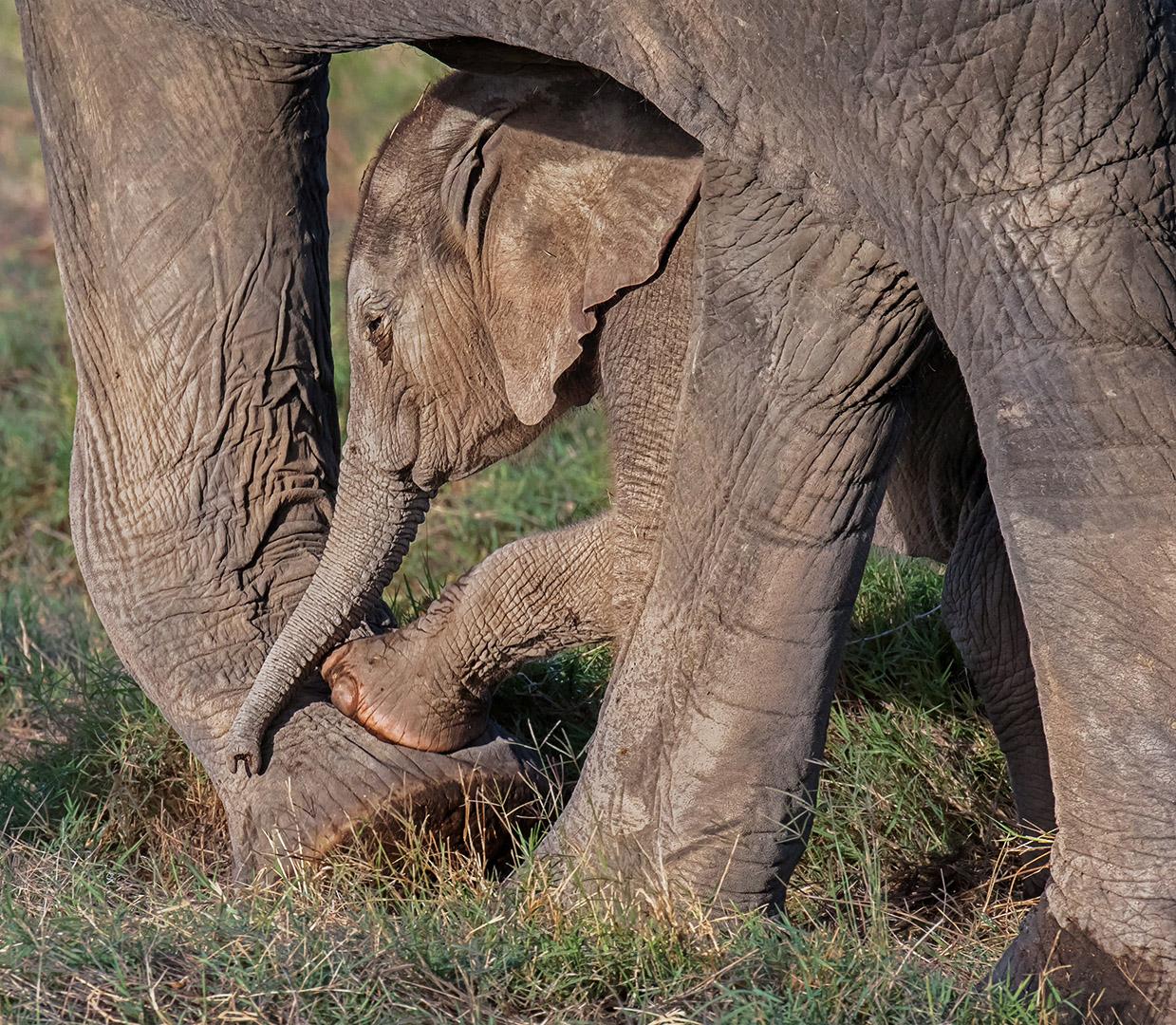Sandy (Yan Hua) Lu – Elephants-Mommy, it's fun! – HM
