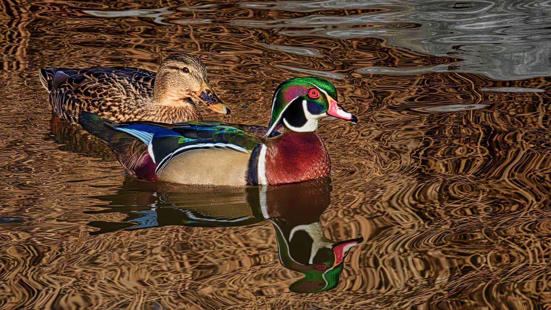 Stephen Balke – Mallard Wood Duck Couple – 1ST