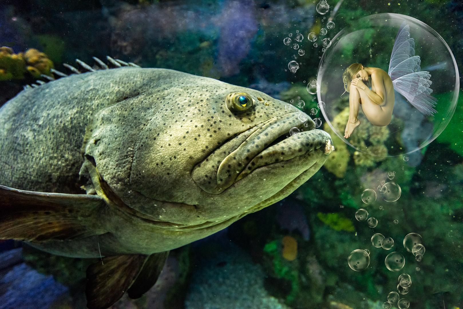 Jon Clarke – Fish Food Fairy – 1ST