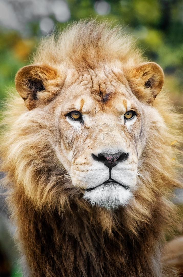 Jim Prieur – Lion – 1ST