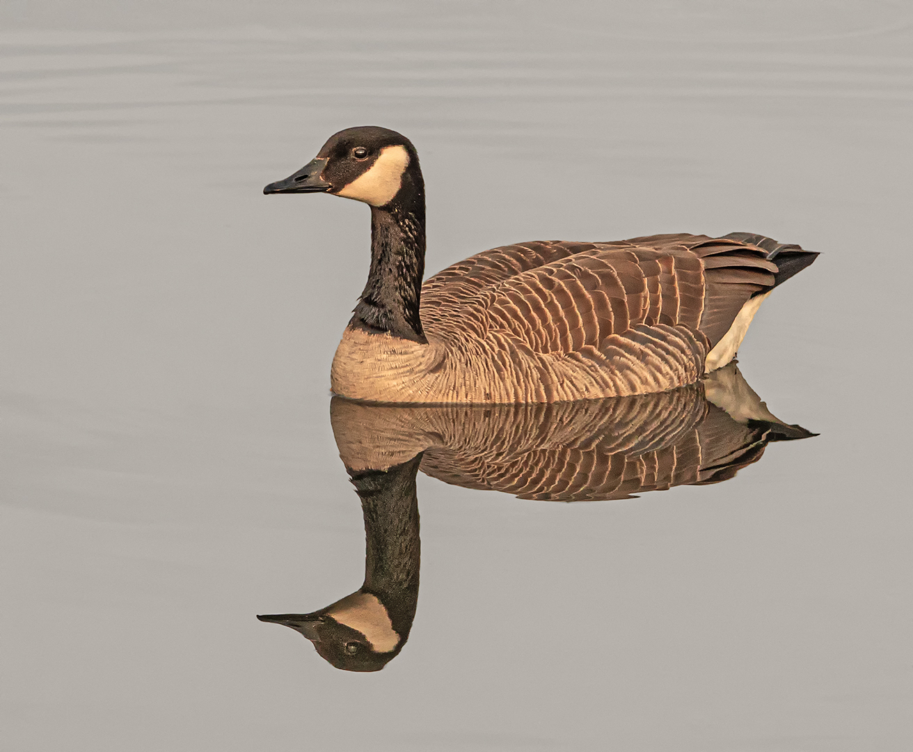 Barbara Kell – Canada Goose Reflection – HM